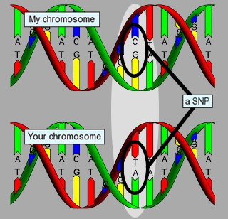 two chromos with SNP